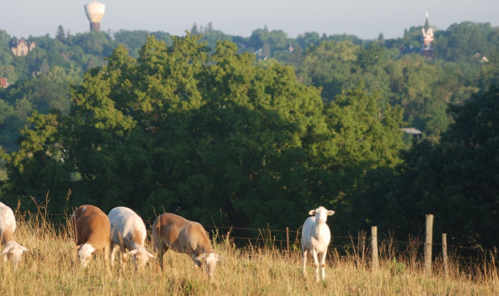 Point View Farm